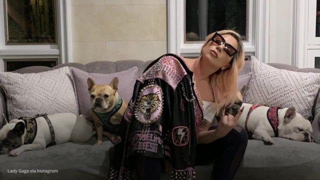 Lady Gaga: αίσιο τέλος στην περιπέτεια με την απαγωγή των σκύλων της - Δείτε το βίντεο της απαγωγής τους και του πυροβολισμού του 30χρονου υπαλλήλου της