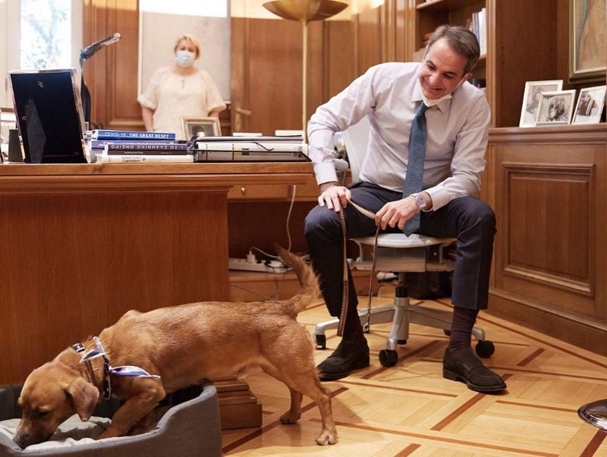 Το Μαξίμου έχει πλέον… το σκυλάκι του! Ο Μητσοτάκης υιοθέτησε τον Πίνατ [φωτογραφίες]