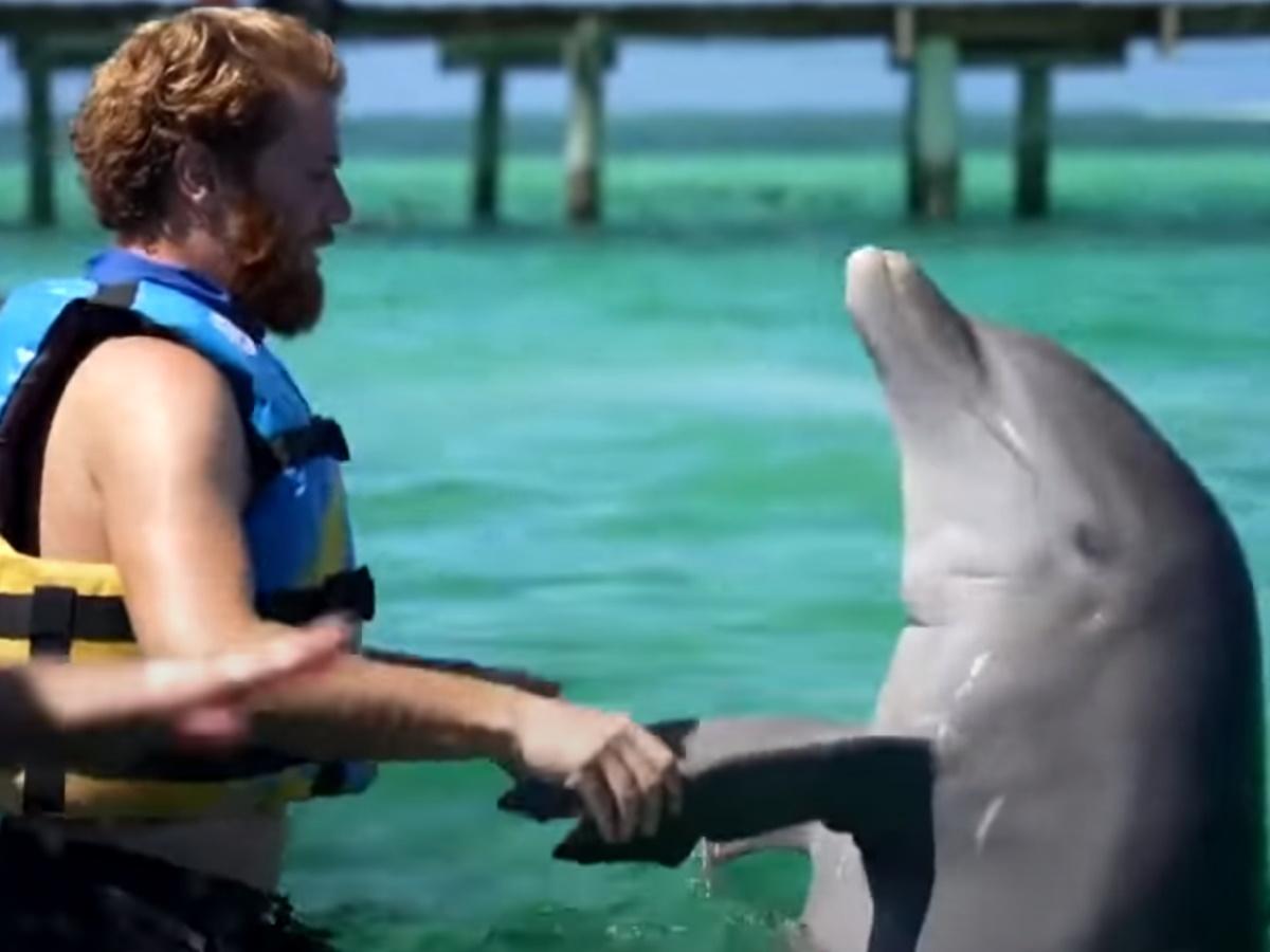 Survivor 4: Οργή στα social media για την κακοποίηση των δελφινιών που παρουσιάστηκε ως έπαθλο